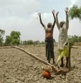 बुंदेलखंड : किसानों ने जंगलों में छोड़े मवेशी